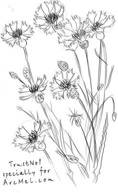 How to draw a cornflower step 4                                                                                                                                                                                 More