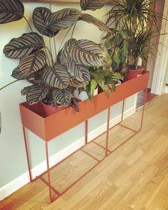 ferm LIVING Plant box in ochre: http://www.fermliving.com/webshop/shop/green-living/plant-box-ochre.aspx
