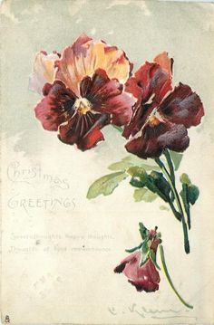 1904 Pansies postcard by Catherine Klein