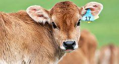 Rampant Animal Cruelty Exposed at Land O'Lakes