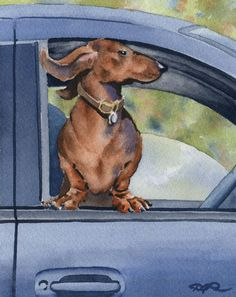 DACHSHUND Art Print Signed by Watercolor Artist DJ Rogers via Etsy.