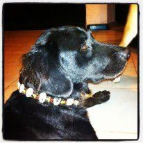 Tiesto, a friend of Coco in the old days with Rasta Beach Dog Collar