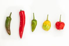 """One of the highlights of my year is the annual """"Spicy Food Festival"""" that takes place in my neighborhood. Aside from adding some great music and delicious food, it's also really good for my health."""