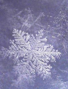 Sugar Plum Snowflake by CaptPiper, via Flickr