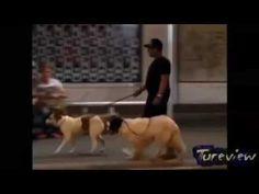 Video Clip Hài Hước Vui Nhộn - Những Tình huống Lỗi không thể nhịn cười p8