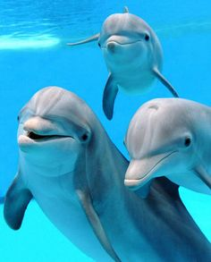 Dolphins Photo: Dolphins🐬