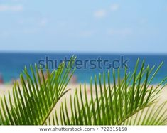 Find Vacation Background Palm Tree Foreground Behind stock images in HD and millions of other royalty-free stock photos, illustrations and vectors in the Shutterstock collection. Thousands of new, high-quality pictures added every day. The Expanse, Palm Trees, Photo Editing, Stock Photos, Sea, Vacation, Nature, Plants, People