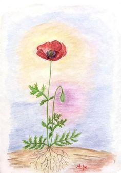 Waldorf ~ 5th grade ~ Botany ~ Poppy ~ main lesson book