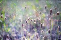 HALF PRICE SALE Fairy tale dreamy art photograph by InmostLight