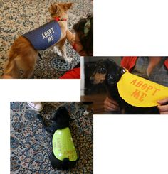 """Vest anyone can make! I plan on passing this on to the local shelter AND using it for my own pups """"Security"""" vest at our Halloween party"""