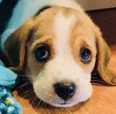 Beagle Puppy, Corgi, Large Dogs, Small Dogs, Cute Watermelon, Dog Phone, Custom Dog Collars, Warm Bed, Pet Id