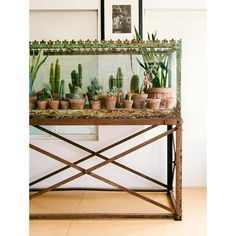 Gorgeous boho decor from The New Bohemians by Justina Blakeney Big Indoor Plants, Indoor Garden, Indoor Cactus, Cactus Rock, Cactus Cactus, Decoration Cactus, Bohemian Chic Home, Bohemian Gypsy, Hippie Chic