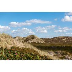 Dünenlandschaft hinter dem Strand bei Kampen, Sylt, Fototapete Merian, Fotograf: W. Schmitz