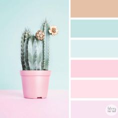 100 Color Inspiration Schemes : Mint and Pink Color Palette #color #colorinspiration #palette