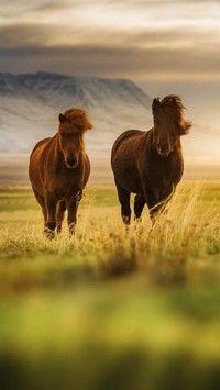 Konie na łące w górach