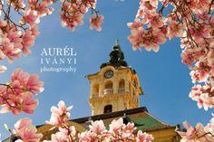 IVÁNYI AURÉL photography: Liliomfa és a városháza - avagy, ahogy én látom a ...