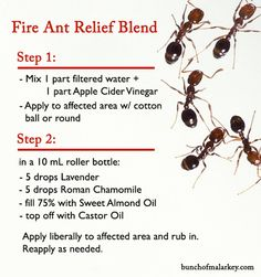 Fire Ant Relief Blend - it worked so well! Click through for before and after pic!