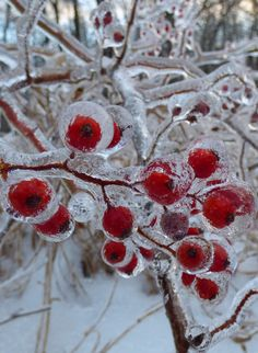 Ice-encapsulated Berries by Rob Porter / 500px