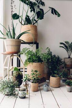 fotos de plantas de interior de hojas verdes