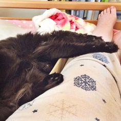 I think my cat is broken. Send help.  #purrsday #cats #rescuecat #catsofinstagram #catstagram #blackcats #blackcatswag #blackcatsofinstagram