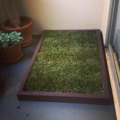 Big potty area on deck for dogs. Add some stones for walking path