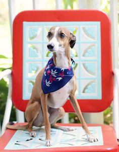 How to *easily* make a bandana for your dog.