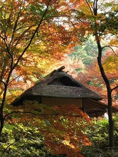Woods of Rikugien Gardens (六義園の雑木林)