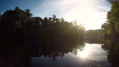 Sunrise on the Hillsborough River Closer To Nature, Tree Lighting, Central Florida, Get Outside, The Outsiders, Sunrise, River, Activities, Videos