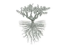 Old Vine Grapes by Steven Nobel - Just love this drawing!