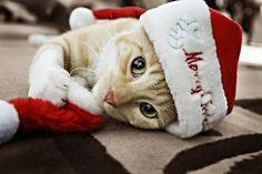 christmas cat Jen wishes you a good night with a big cat hug and xx