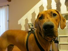 GoPro...would love to do this with Mia...