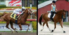 Seven years ago during this same week, a colt (at the time) by the name of Radiohead was preparing for his North American debut in the Breeders' Cup Juvenile. The speedy chestnut son of Johannesburg had been making headlines in his native Great Britain, winning the Group 2 Norfolk Stakes at Royal Ascot and finishing …