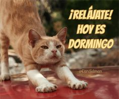 ¡Relájate! Hoy es #Dormingo. @candidman #Frases #Domingo Marceline, Tiger, 1, Reading, Funny, Books, Frases Humor, Animals, Spanish