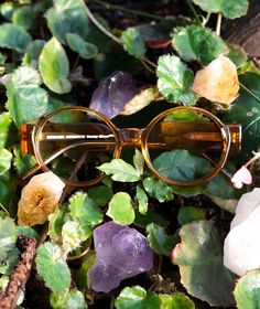 Classic pilot sunglass shape given a fresh outing in acetate. Honey Glaze, Clear Crystal, Eyewear, Classic, Collection, Design, Art, Derby, Art Background