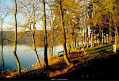 Charavines. Bois d'Amour avant l'aménagement de 2013. C'était beau, cette nature vierge...