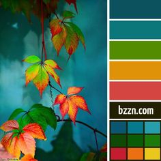 Forest: Complimentary colors are red, orange and blues Colour Pallette, Color Palate, Colour Schemes, Color Combinations, Design Seeds, Forest Color, Color Harmony, All Nature, Color Swatches