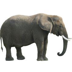 Elephant | Immediate Entourage