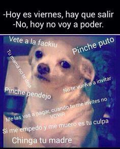 18 Veces en las que el meme del perrito reflejó tu 2015 a la perfección