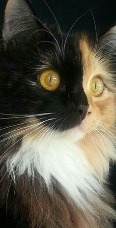 31 Cute Cat Pictures — Adorable Kitten Cats are naturally mischievous animals and very adorable creatures. If you own a cat, you will have a cuddle buddy Cute Cats And Kittens, Cool Cats, Kittens Cutest, Ragdoll Kittens, Tabby Cats, Abyssinian Kittens, Bengal Cats, White Kittens, Black Cats