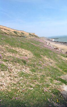 Barton on sea, cliffs, near where I grew up Fossil Hunting, Bournemouth, Picnics, Greece, Swimming, Europe, Australia, Sea, Mountains