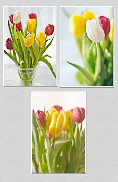 Set of 3 spring flower print Fine art tulips canvas by PhotoMood
