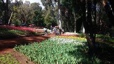 Do you know Araluen Botanic Park – WA ?