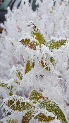 Winter in Nederland 2