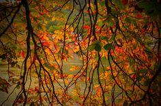 Autumn awaits... -