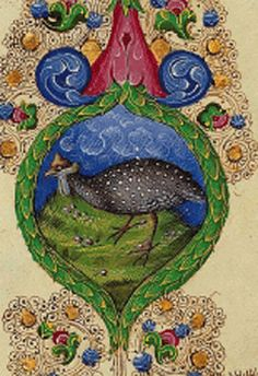 Guinea-hen from the Bible of Borso d'Este, 1455 - beautiful painting
