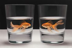 orange goldfishes in glass cups, painting by patrick kramer