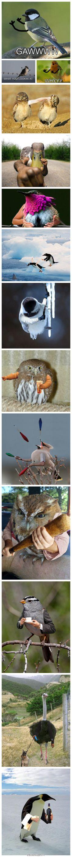 发现一个异怪的网站 birdswitharms.tumblr.com