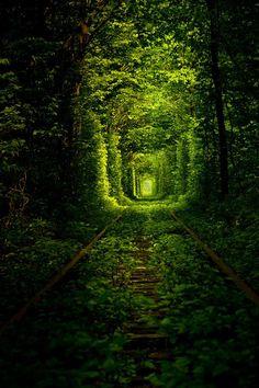 The tunnel of love - Ukraine... I won't die happy until I walk these tracks.