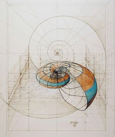 Nautilus ~ by Rafael Araujo  #art #illustration #spiral #Fibonacci