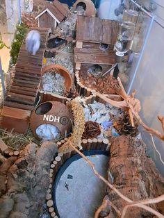 Hamster Life, Hamster Habitat, Hamster Stuff, Hamster Toys, Hamster Treats, Dwarf Hamster Cages, Cool Hamster Cages, Hedgehog Supplies, Russian Hamster